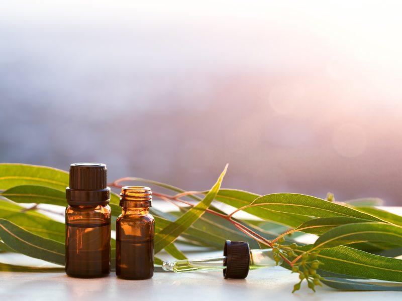 eteriska oljor eukalyptus